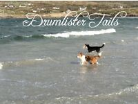DRUMLISTER TAILS- PET SERVICES, DOG SITTING, PRIVATE OBEDIENCE etc