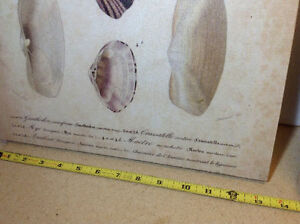 "2 NEW with tags shell prints on canvas - 13.5"" x 20"" Cambridge Kitchener Area image 2"
