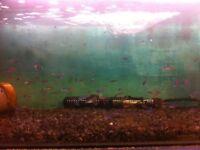 fish fish fish leeds