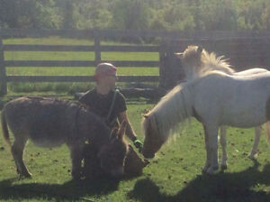 BAREFOOT TRIMMER/FARRIER AVAILABLE IN PETERBOROUGH AREA