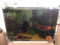 Superfish 80 Complete set up with Fish