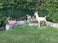 DEER IN YOUR OWN BACK YARD