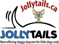Jollytails offers little dog daycare too!