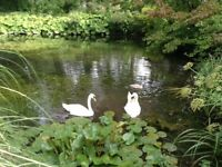MAGICAL RIVERSIDE GARDENS - Comfy Double Bedroom Available in Lovely Country House
