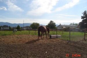 horse/farm land for rent