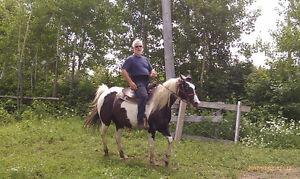 Jument paint horse Enr.