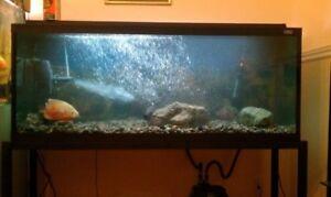 Hagen 65 Gallon Fish Tank 4 feet