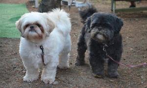 A Small/Medium Puppy/Dog