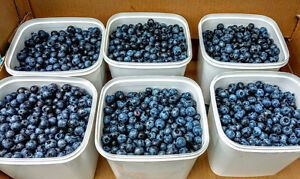 Yard Sale Saturday and Sunday+ Blueberries!