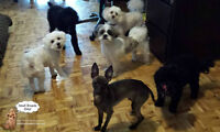 Sleepaway camp for small dogs In my home open all year no cages