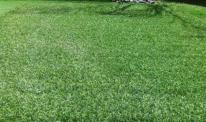 Natural Look Artificial/Synthetic/Fake Grass/Lawn/Turf Adelaide Region Preview