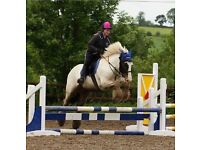 Super family pony for part loan