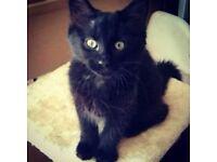 Kitten female 14 weeks - Had injections