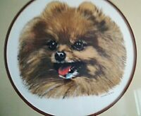 Custom Framed Pomeranian Photo
