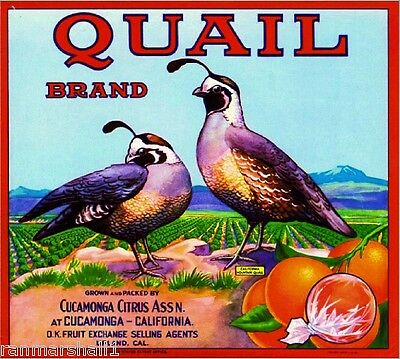 Cucamonga Upland Quail #3 Orange Citrus Fruit Crate Label Art Print