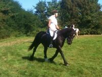 14hh pony for part loan Horndean