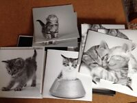 NEW & BOXED - Pack of 12 KITTEN GREETINGS CARDS (4 DESIGNS) by Clintons