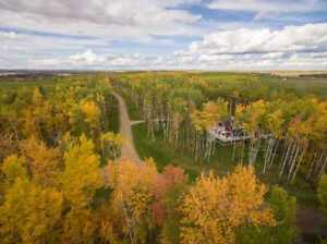 Forested/Treed lots at Deere Park at Gull Lake