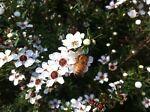 BeeBizorganics