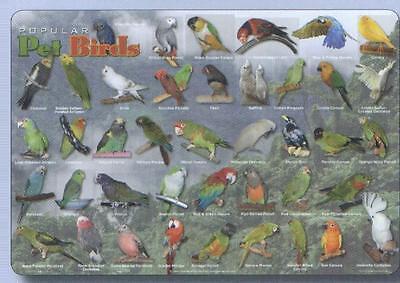 Pet Birds Educational Activity Placemat