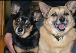 Niagara Dog Rescue - Lady and Trooper are Looking for You!