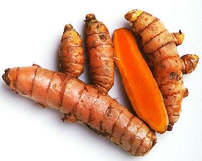 Turmeric Roots: Yellow Fresh Whole Raw Organic 1LB -NON GMO - Fresh Harvest