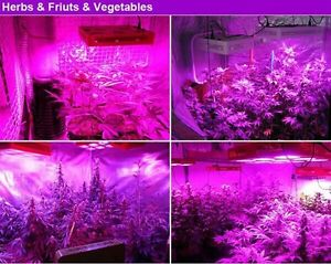 Full spectrum 1536W COB LED grow Light HPS Killer hydroponic Peterborough Peterborough Area image 5