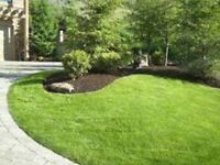 Lawn Care & Yard Services