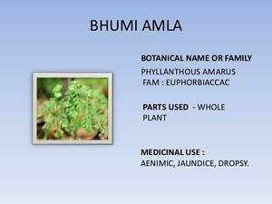 Bhumi Amla - anyone knows where to get/buy it from ? Melbourne CBD Melbourne City Preview