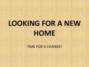 Looking for 3bdrm house/bungalow
