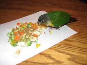 ❤★❤ Baby★ Conures with Cage❤★❤