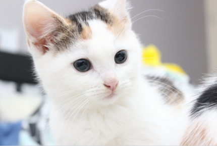 Stella rescue KITTEN to adopt VET WORK INCLUDED