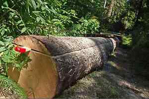 Chainsaw Operator/ Timber Construction Comox / Courtenay / Cumberland Comox Valley Area image 7