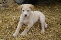 Adorable puppies for sale!