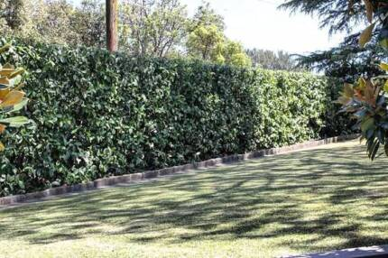 Lawnmowing Hedgetrimming and gardening service