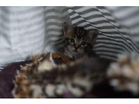 Adorable loving female kitten