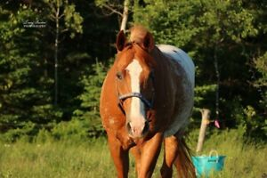 Horses Available for Part Board