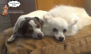 CAGE-FREE HOME BOARDING FOR SMALL DOGS LOCATED IN DDO