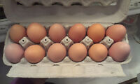 ***FARM FRESH BROWN EGGS***