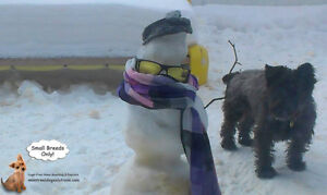 *FULL FOR HOLIDAYS* Dog Daycare & sleepovers for small dogs West Island Greater Montréal image 2