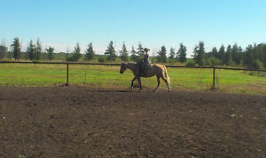 Horse Boarding Available South West of Edmonton Edmonton Edmonton Area image 6