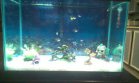 30 gallon tank and all accesories