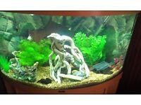 Juwel Trigon Corner Aquarium & Stand Full Setup