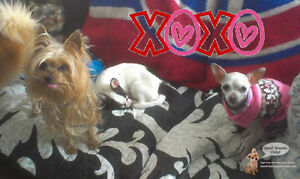 HOME DAYCARE & HOTEL FOR SMALL DOGS. *SINCE 2010* DDO