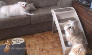 CAGE-FREE SLEEPOVERS & PLAYDATES FOR SMALL DOGS West Island Greater Montréal image 10