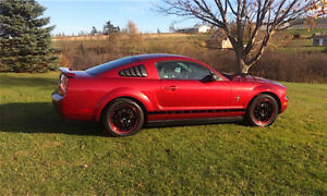 2006 Ford Mustang Amazing Shape