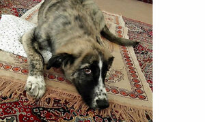 willow -needs a home
