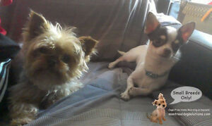 Dog Daycare & sleepovers for small dogs NO CAGES West Island Greater Montréal image 6