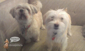 CAGE-FREE SLEEPOVERS & PLAYDATES FOR SMALL DOGS West Island Greater Montréal image 9