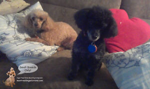 SMALL DOG BOARDING/DAYCARE CAGE-FREE HOME OF CERTIFIED TRAINER West Island Greater Montréal image 6